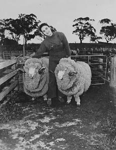 Pastoral industry - Sheep and wool - Stud Merino rams with Miss Jo Heysen, Grandaughter of Sir Hans Heysen on Analby Station, Kapunda, SA [photographic image] / photographer, Cliff Bottomley. 1 photographic negative: b&w, acetate